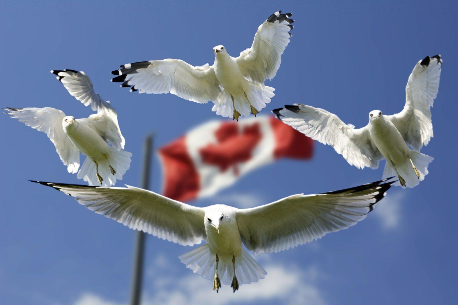 Waffengesetz in Kanada